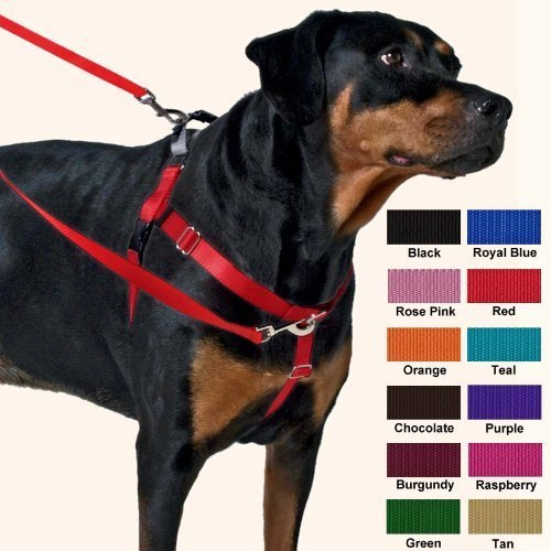 6. Freedom No-Pull Dog Harness Training Package with Leash
