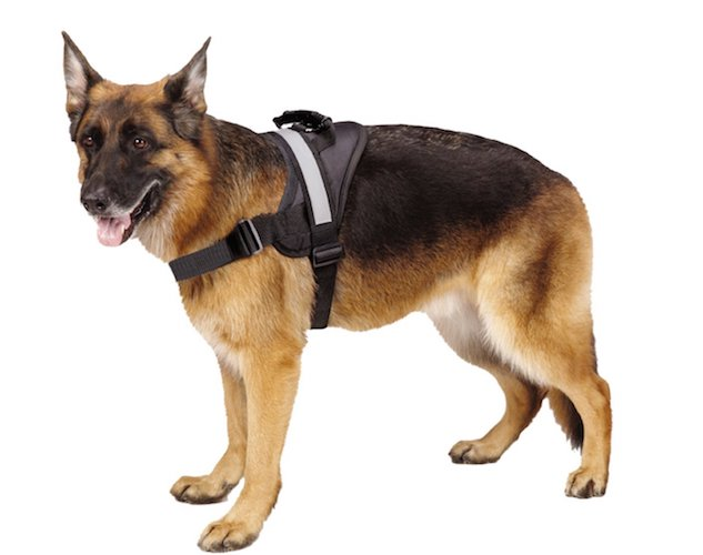 2. Big Dog Soft Reflective No Pull Harness