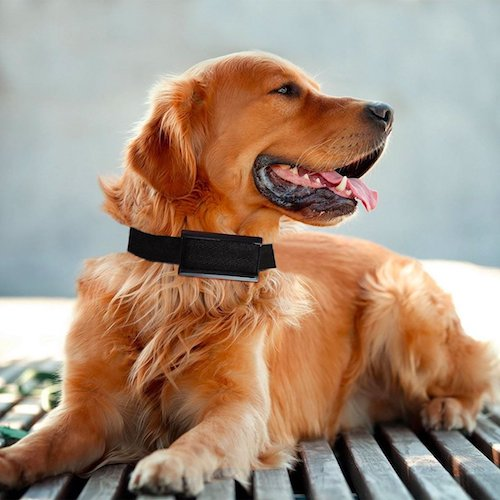 Top 10 Best Dog No-Bark Collars For Sale in 2018 Reviews