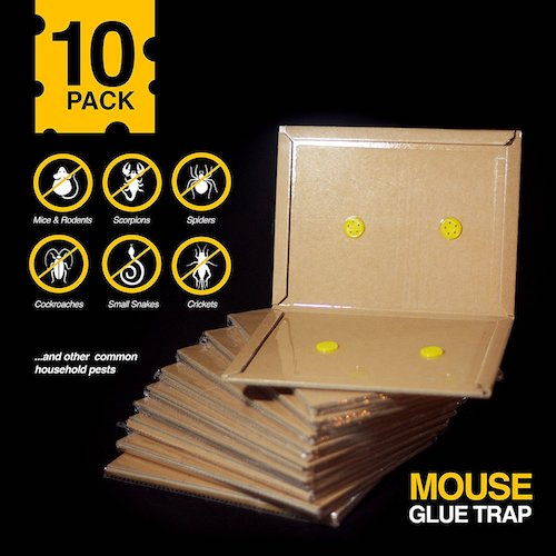 Best Mouse Traps: 3. Pre-Baited Peanut Butter Scented Mouse and Insect Glue Board Trap